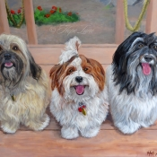 Three Amigos, Three Havanese custom pet portrait painting by Hope Lane