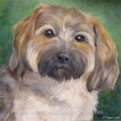 Alice, Havanese custom pet portrait by Hope Lane