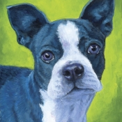 Echo, a Blue Boston Terrier custom pet portrait by Hope Lane