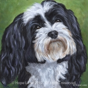 Jasper the Havanese custom pet portrait by Hope Lane