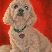 Maggie, custom pet portrait of a Cockapoo by Hope Lane