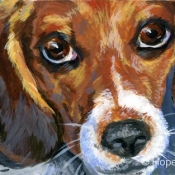 Jackson, custom pet portrait of a Beagle by Hope Lane