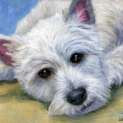 Waiting Westie, Westhighland White Terrier Painting by Hope Lane