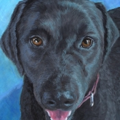Camo, custom pet portrait of a springer spaniel, black lab mix by Hope Lane