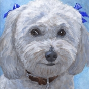 Chuckie, custom pet portrait of Bichon Frise by Hope Lane