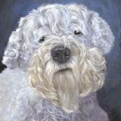 Freddy, the Sealyham Terrier custom pet portrait by Hope Lane