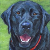 Georgia, a Black Labrador Retriever custom pet portrait painting by Hope Lane