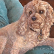 Ivy, the Cockapoo custom pet portrait painting by Hope Lane