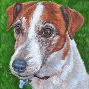 Roscoe, custom pet portrait of Jack Russell Terrier by Hope Lane