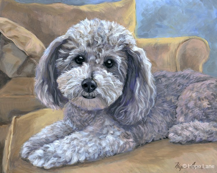 Kirby, custom pet portrait of a Havanese by Hope Lane