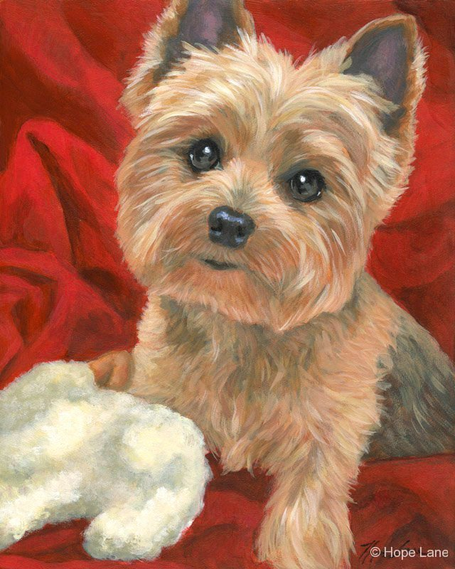 Millie, the Yorkshire Terrier custom pet portrait painting by Hope Lane