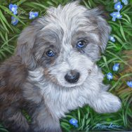 Finished Painting of Kendall the Aussiepoo