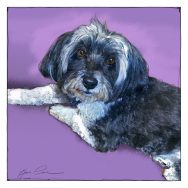 Sketch for a Portrait of Candy the Havanese