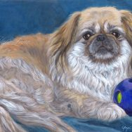 Completed Portrait of Shanti the Pekingese