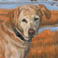 Completed Portrait of Tara, the Yellow Lab