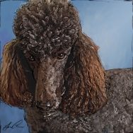 Sketch for a Poodle Portrait