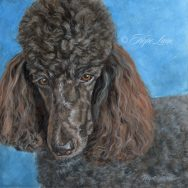 Finished Painting of Kona the Poodle