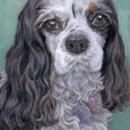 Halfway Through a Cavalier King Charles Spaniel Portrait