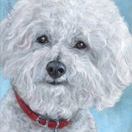 Finished Painting of a Bichon Frise