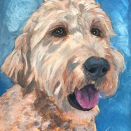 Starting a painting of Charlie the Golden Doodle