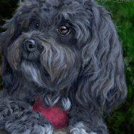 Finished Portrait of Molly the Havanese