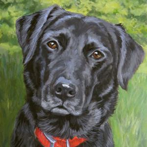 11 x 14 Pet Portrait