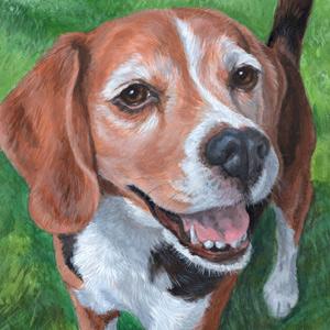 9 x 12 Pet Portrait