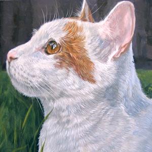 16 x 16 Pet Portrait