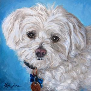 12 x 12 Pet Portrait