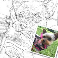 Simple Sketch for Ella the Yorkie