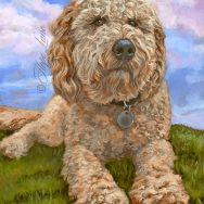 Completed Portrait of a Goldendoodle