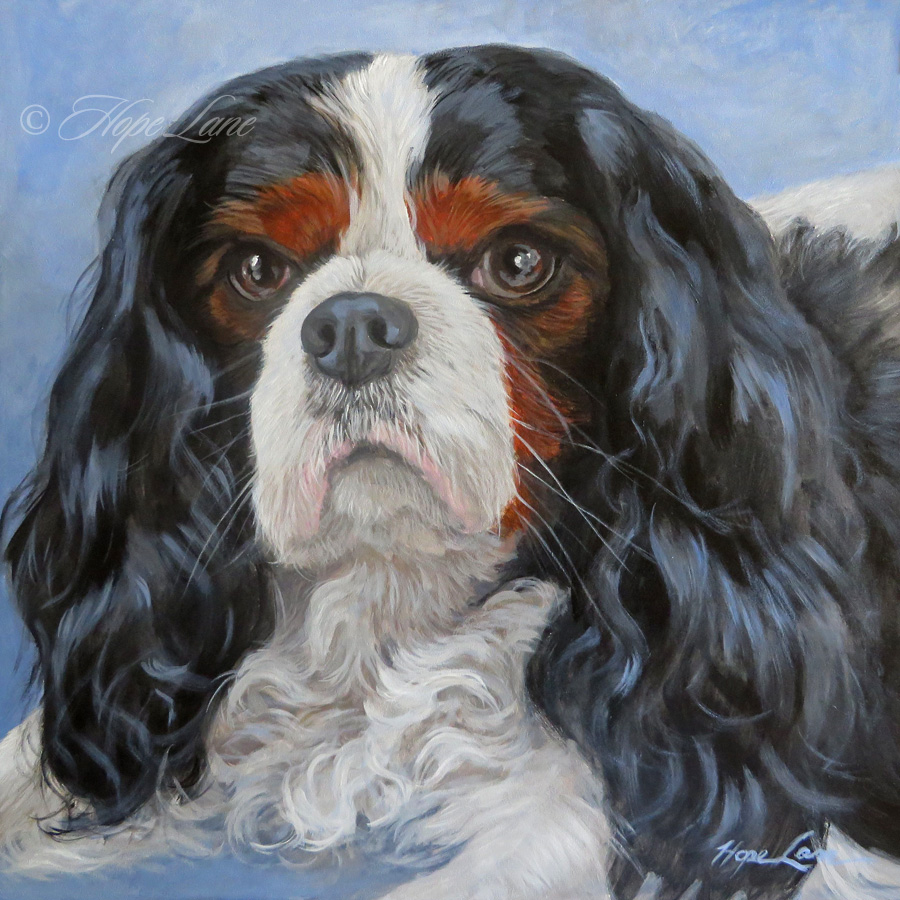 Bentley the Cavalier King Charles Spaniel custom pet portrait painting by Hope Lane