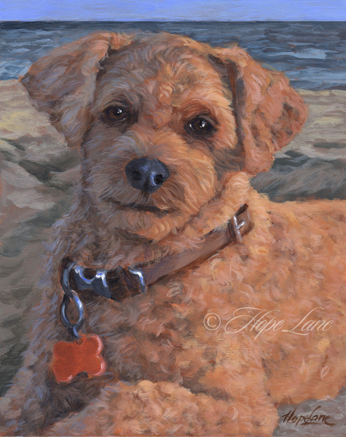 Grover, custom pet portrait of a Cockapoo by Hope Lane