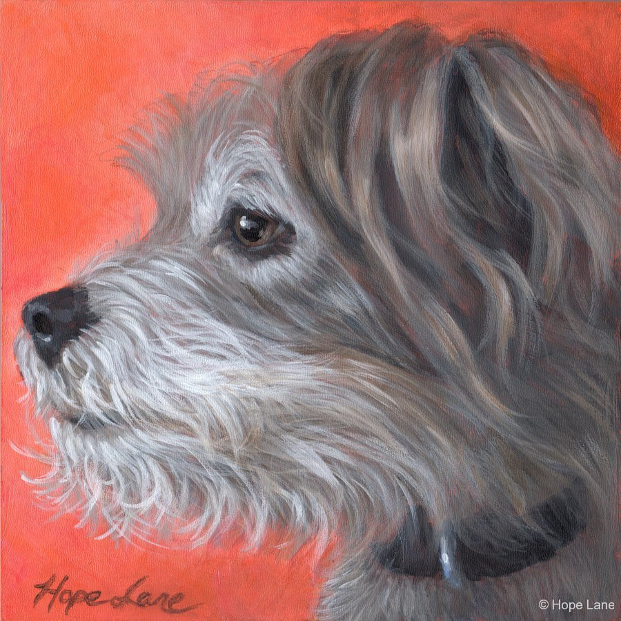 Buddy, custom pet portrait of a Terrier mixed breed by Hope Lane