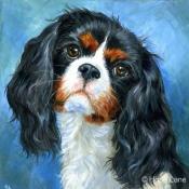 Bella, custom pet portrait painting of a King Charles Cavalier Spaniel by Hope Lane