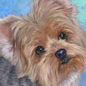 Mel the Yorkshire Terrier custom pet portrait painting by Hope Lane