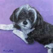 Candy the Havanese custom pet portrait painting by Hope Lane