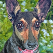 Coppelia, custom pet portrait of Rescue by Hope Lane