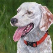 Huckleberry, custom pet portrait of an English Setter by Hope Lane