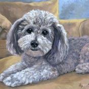 Kirby, custom pet portrait of a Havanese by Hope Lane