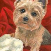Millie, the Yorkshire Terrier custom pet portrait painting by Hope Lane