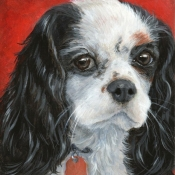Morgan, custom pet portrait of a King Charles Cavalier Spaniel by Hope Lane
