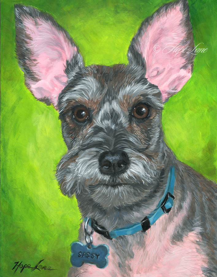 Sassy the Schnauzer custom pet portrait painting by Hope Lane