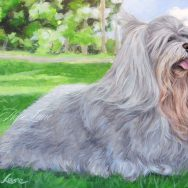 Celebrating Florida Dogs With Latte the Havanese