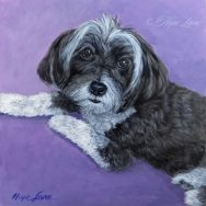 Candy the Havanese Finished Pet Portrait