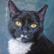 Midway Through Tuxedo Cat Painting