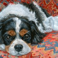 Finished Portrait of a Cavalier King Charles Spaniel Named Mack