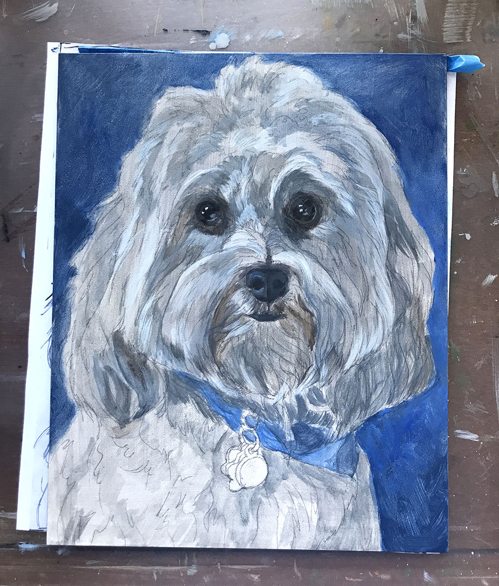 Starting A Portrait of a Havanese Named Thai