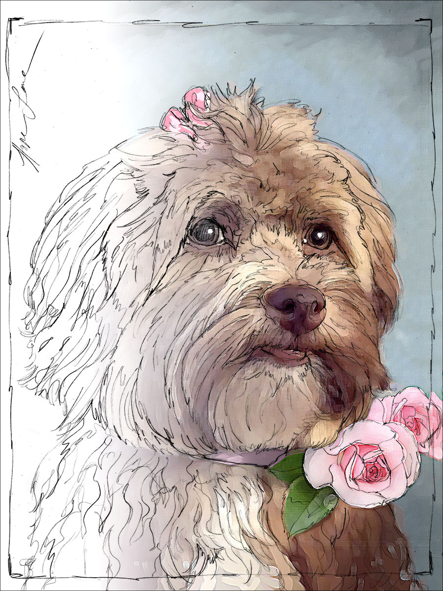 Starting a Portrait of Ember the Havanese