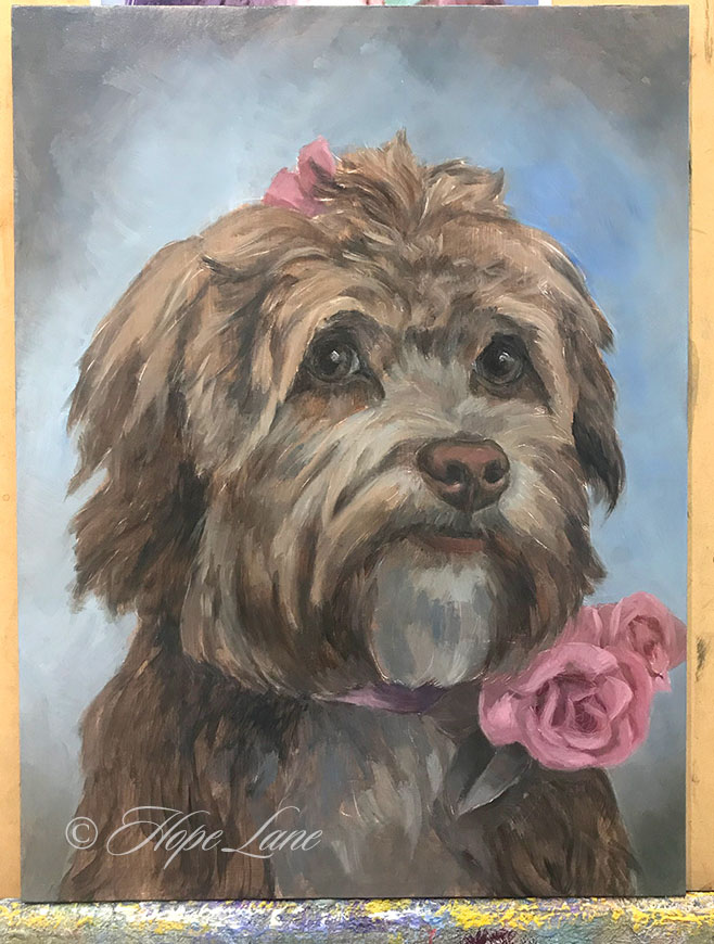 First Stage Painting for a Havanese Portrait